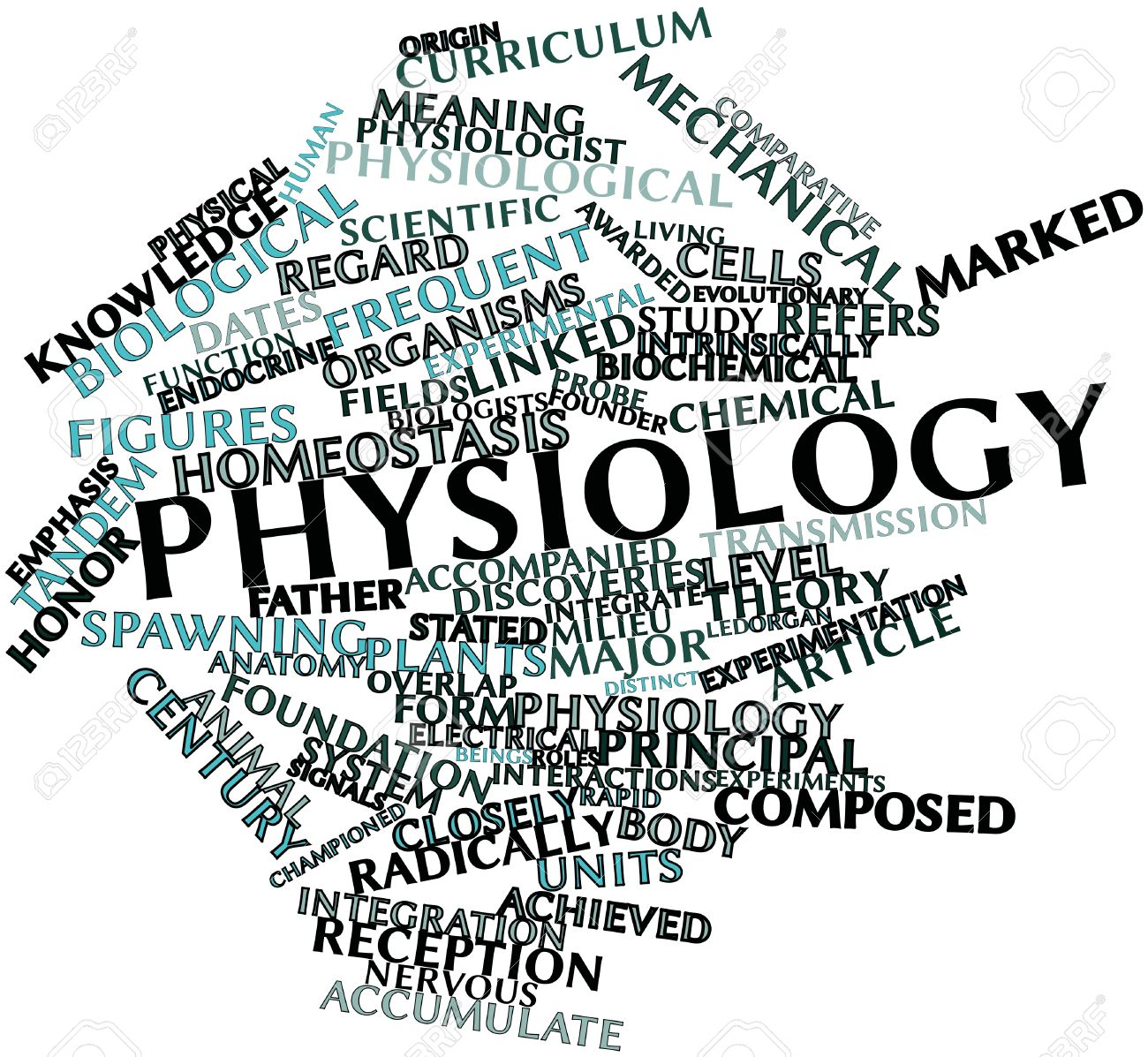 Report from the Inaugural Physiology Majors Interest Group Meeting ...